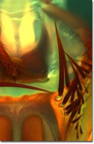 Musca domestica Pomel Lampy Owadobójcze